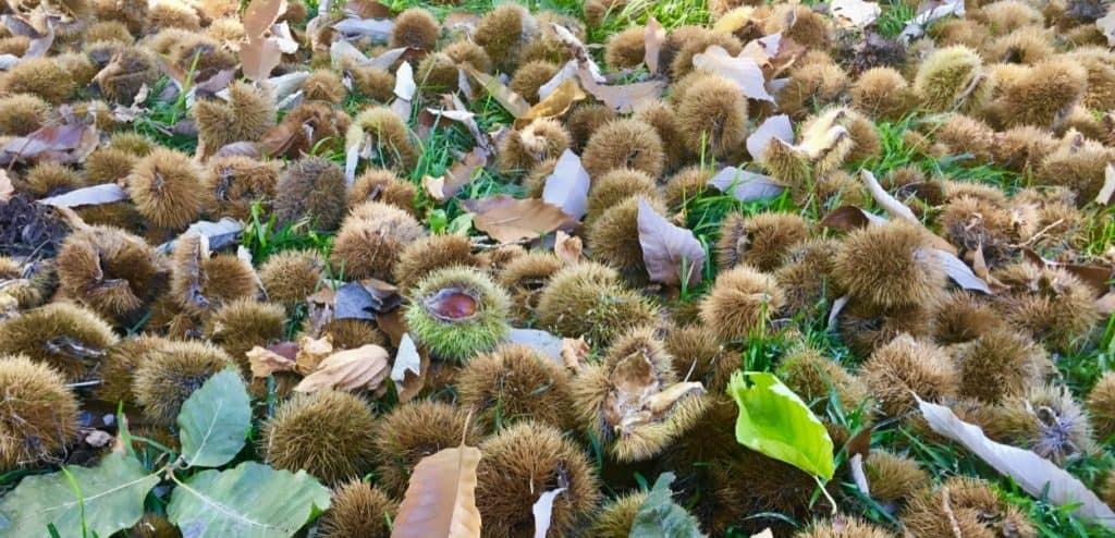 Okanagan Nut Farm
