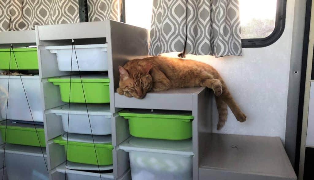Travel cat sleeping on storage bins